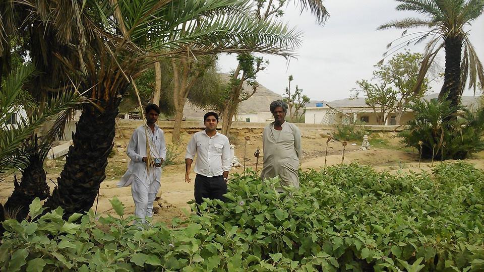 shahfarm