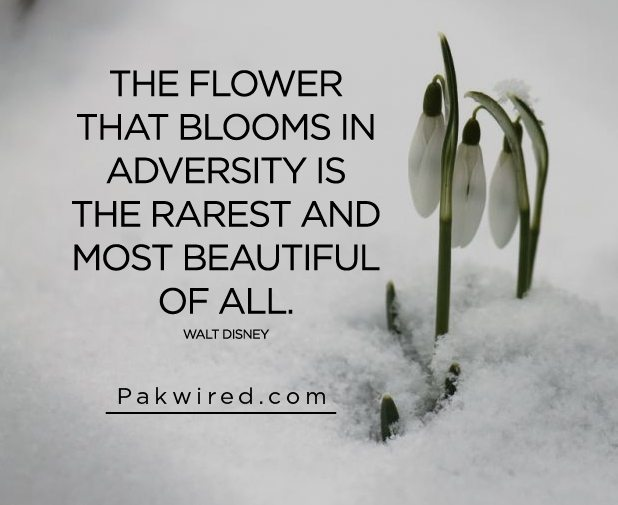 The flower that blooms in adversity is the rarest and most beautiful of all-01