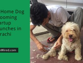 dog-startup