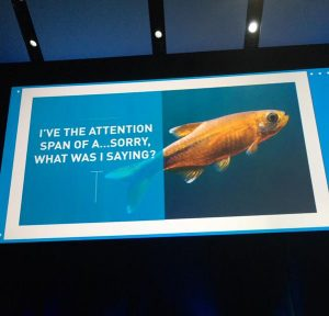gold fish attention span