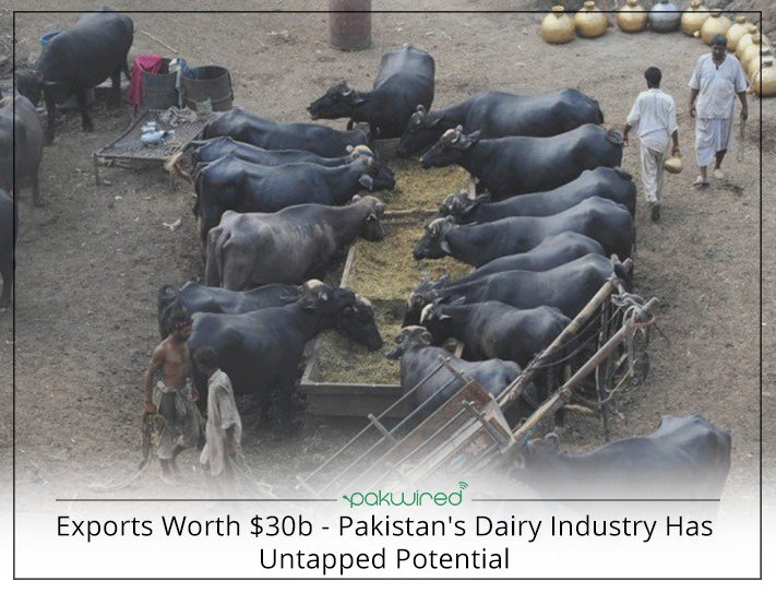 dairy industry of pakistan marketing essay Compare to their fair share from retail market prices the price spread in milk  marketing chain of pakistan is wider as many small scale intermediaries are.